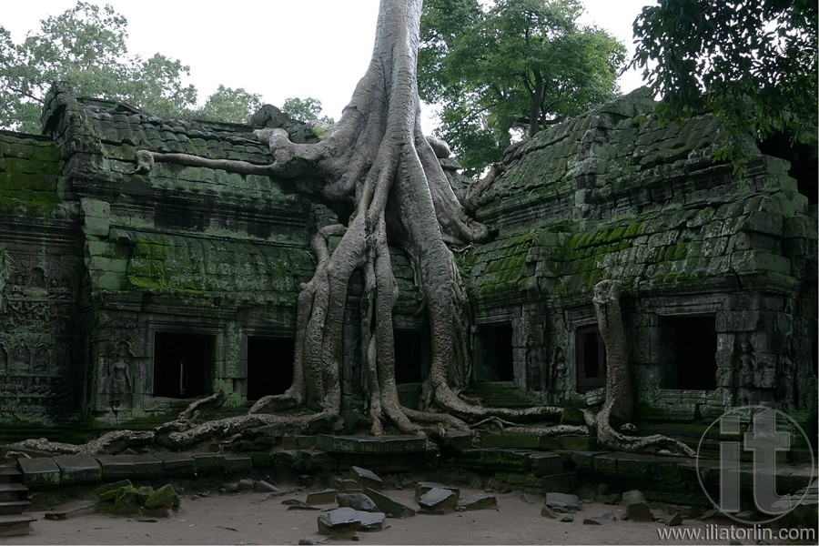Roots Travel India