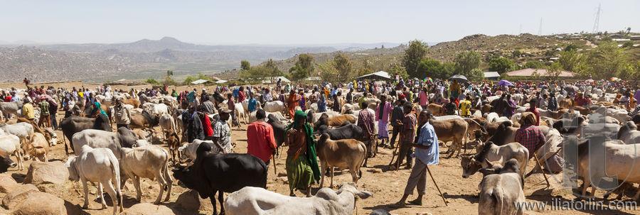 livestock in ethiopia 2012-4-30 fact sheet: livestock ethiopia livestock in ethiopia and opportunity analyses for dutch investment september 2010 nabc.